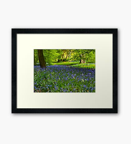 A Carpet of Bluebells Framed Print