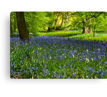 A Carpet of Bluebells Canvas Print