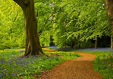 Woodland Path by Trevor Kersley