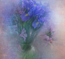 Iris Aglow by Carolyn Staut