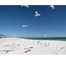 Feeding the Seagulls at Pensacola Photographic Print