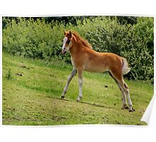 Foal Playtime Poster