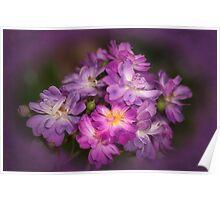 Veilchenblau Roses Poster