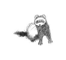 Ferret Sketch by Polecatty