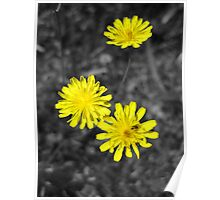 Yellow on Black - Wildflower in Mars Hill, N.C. Poster