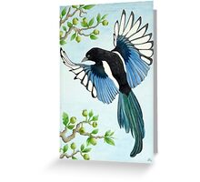 A Magpie in flight Greeting Card