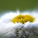 Dreamland Daisy by TriciaDanby