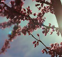 Spring by Shayna Sharp