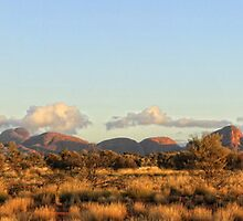 Kata Tjuta Tree by Phil Webb