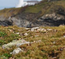 Distant Lighthouse by Llawphotography