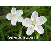Thank You For Being a Friend Photographic Print