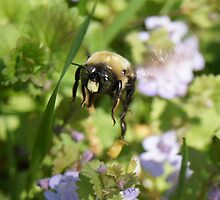 Bee 'n Busy! by BLemley