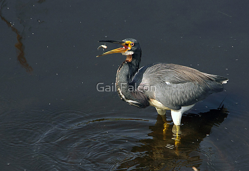 Nice Catch! by Gail Falcon