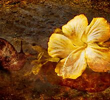 The Snail and Hibiscus by BoB Davis