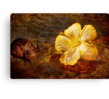 The Snail and Hibiscus Canvas Print