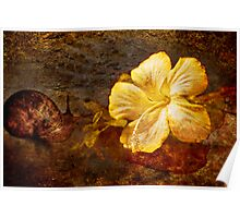 The Snail and Hibiscus Poster