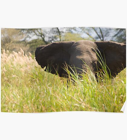 Elephants are Curios Poster