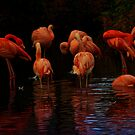 Flamingos by ajgosling
