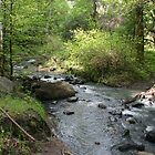 Babbling Brook 2, Bothe-Napa State Park by Maurine Huang