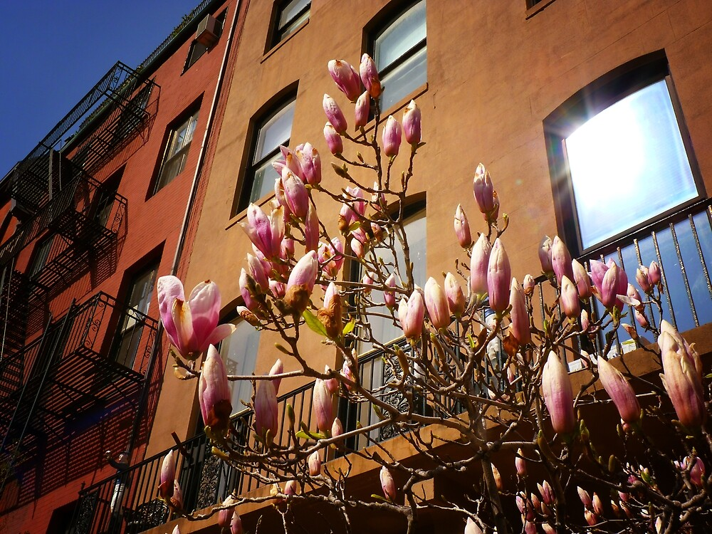 Spring Blossoms in New York City by Vivienne Gucwa