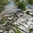 Steel Rope - Lake Michigan by mjparsons