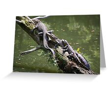 Mama, Daddy and Baby Alligator Greeting Card