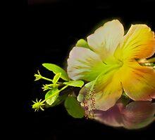 Hibiscus on Black by BoB Davis
