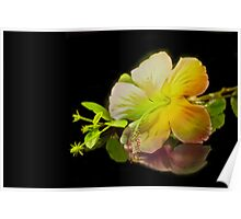 Hibiscus on Black Poster