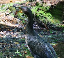 Cormorant and the Fish by Paulette1021