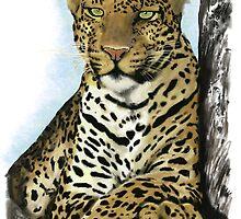 Cheetah by Skot  Schuler