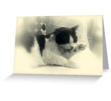 A feline romance Greeting Card