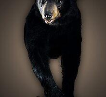 Black Bear by bundtm