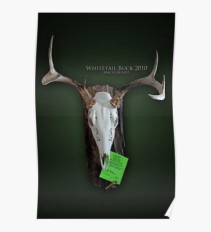Whitetail Deer Poster