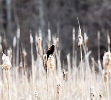 Blackbird by bundtm