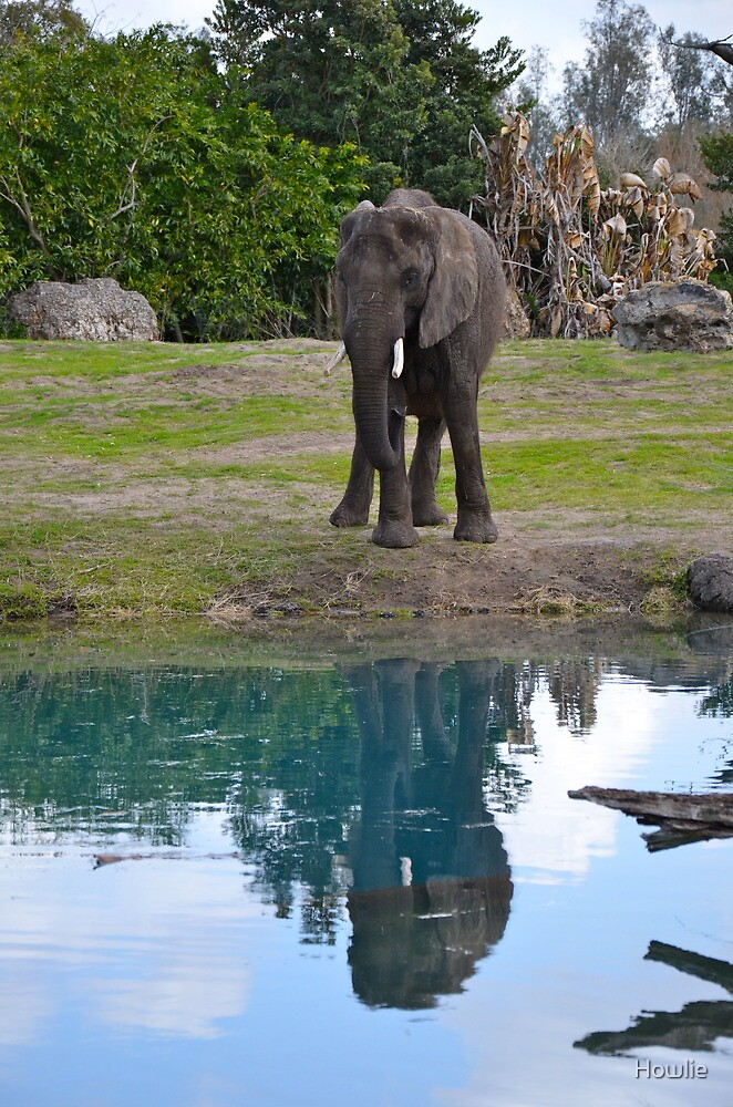 Elephant Reflection by Howlie
