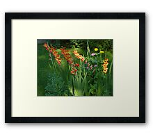Humid Cool  Framed Print