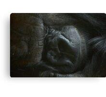 Silverback... sleeping Canvas Print