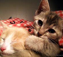 Siblings by Josh Glass