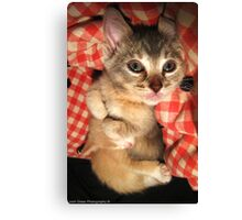 Cuddle Kittens Canvas Print