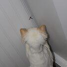 in the corner again by katpartridge