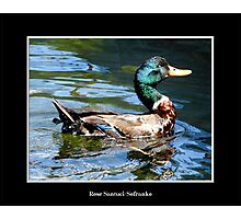 Smiling Duck Photographic Print