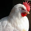 A hen called Snowy by Dulcina