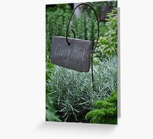 Curry plant by stellaclay Greeting Card