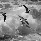 Gulls on the wing. by Norman Winkworth