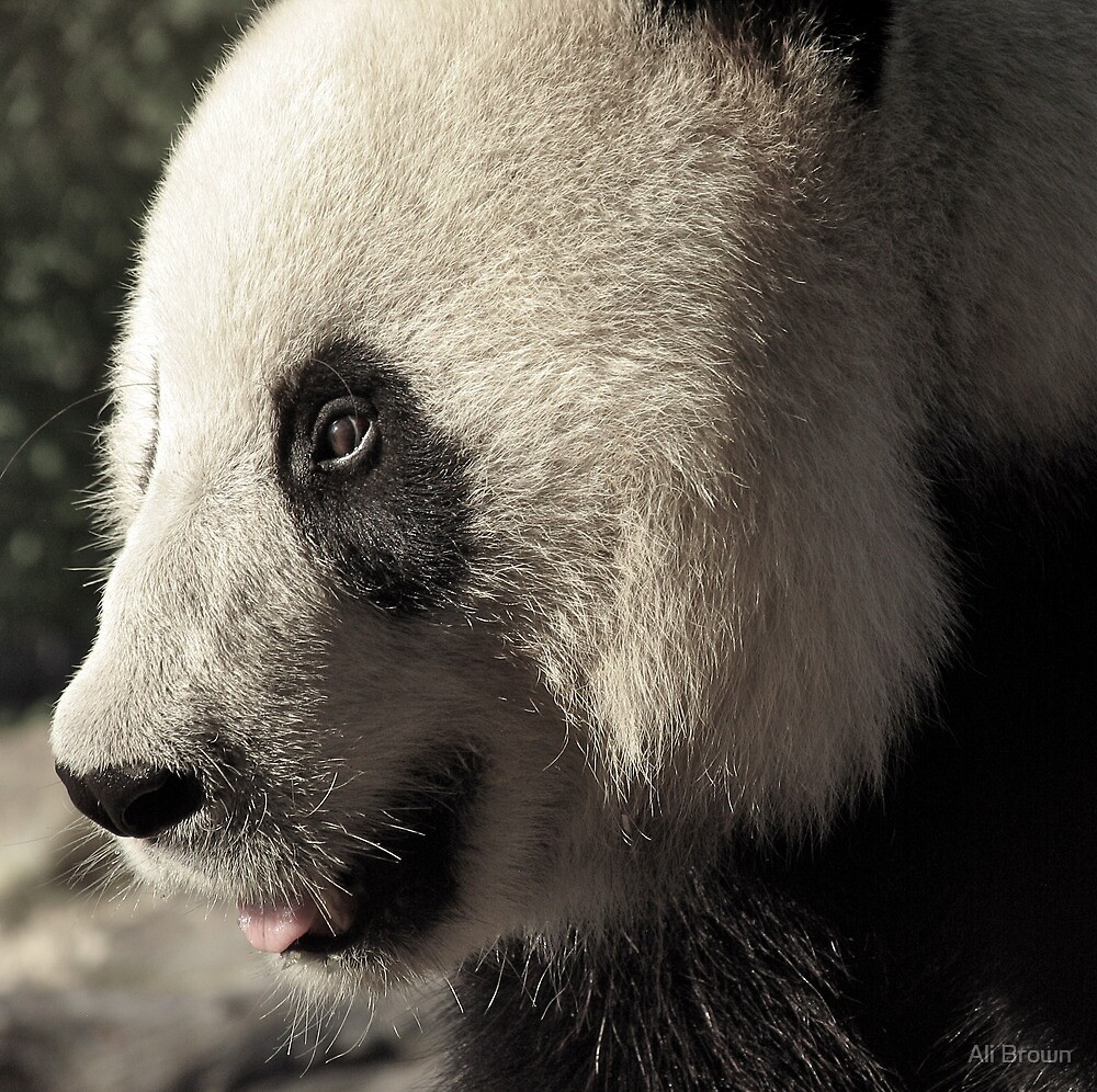 Wang Wang the Panda Bear.... by Ali Brown