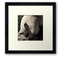 Wang Wang the Panda Bear.... Framed Print