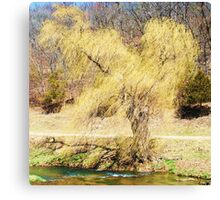 """ Windy Willow "" Canvas Print"