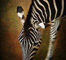 Z is for....Zebra by Lissywitch