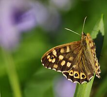 Spring Butterfly by Guy Carpenter