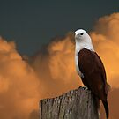 The Evening Perch by byronbackyard